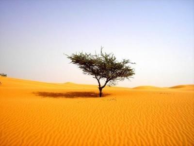albero-deserto-400x300.jpg